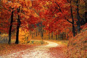 fall-e835b60d20_640